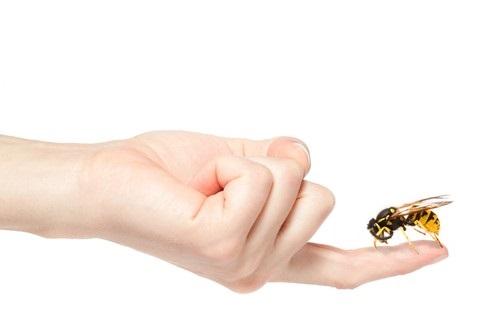 Апитоксинотерапия - лечение пчелиным ядом