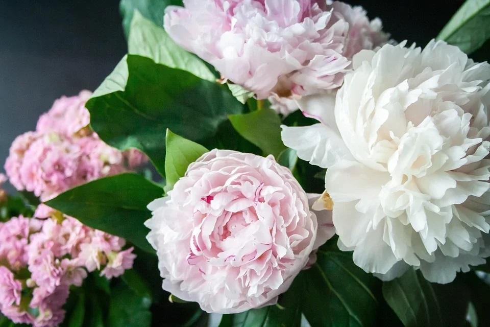 Какой цветок символизирует любовь, удачу и силу?