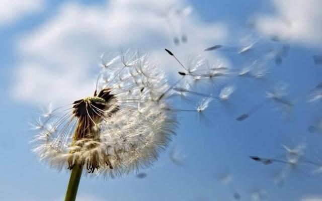 Весенняя аллергия. Как её облегчить?