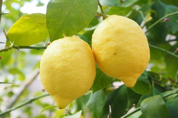 От чего помогает лимон?