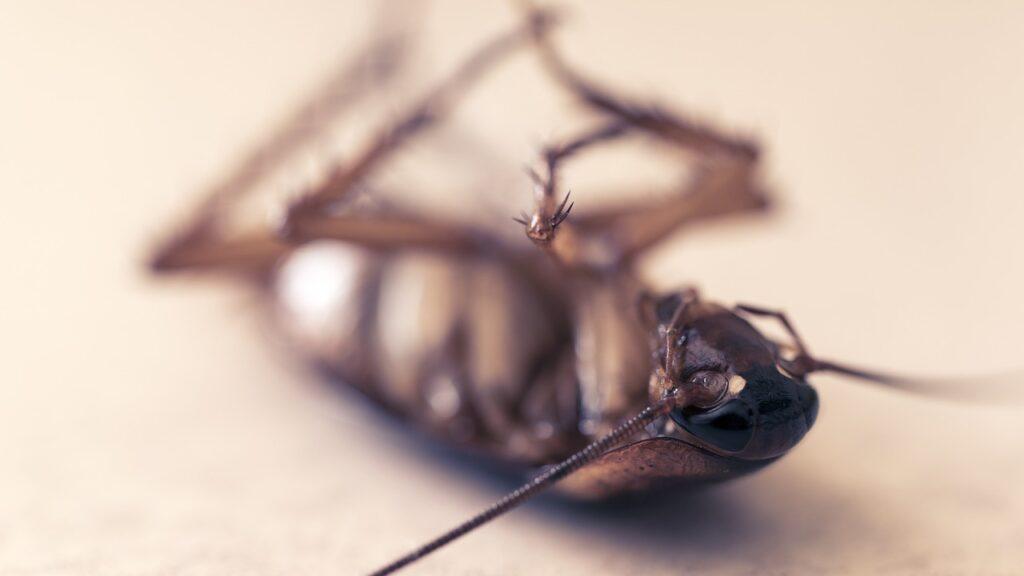 Как избавиться от тараканов естественным путем